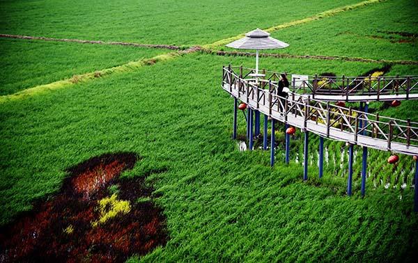 据介绍,这些稻田画包括《中国梦 幸福起航》《中国日子 呱呱叫》《小