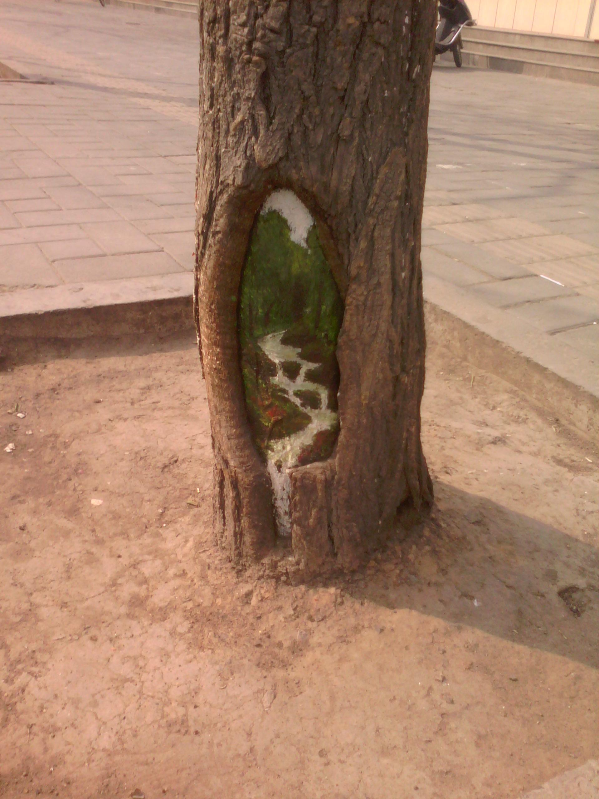 石家庄的树洞画你看过没